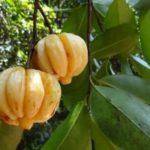 Slimanizer Garcinia Cambogia